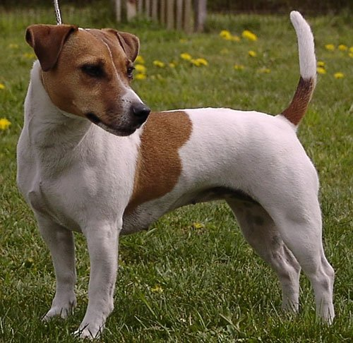 Suchergebnis auf Amazonde fr: Jack Russel Terrier: Spielzeug