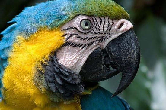 обои hd попугаи