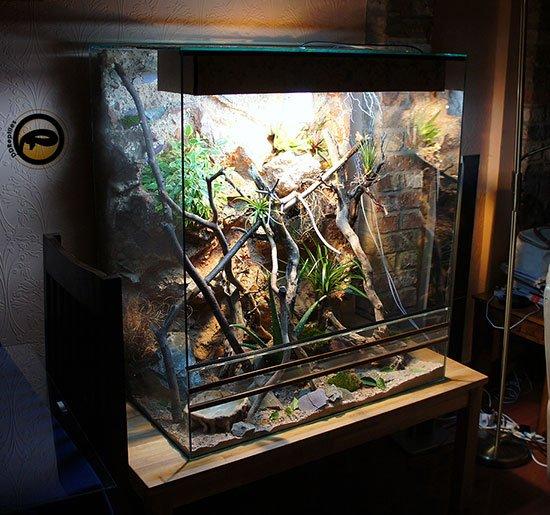 Террариум своими руками для хамелеона из стекла