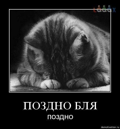 Если у кошек пупок - 3