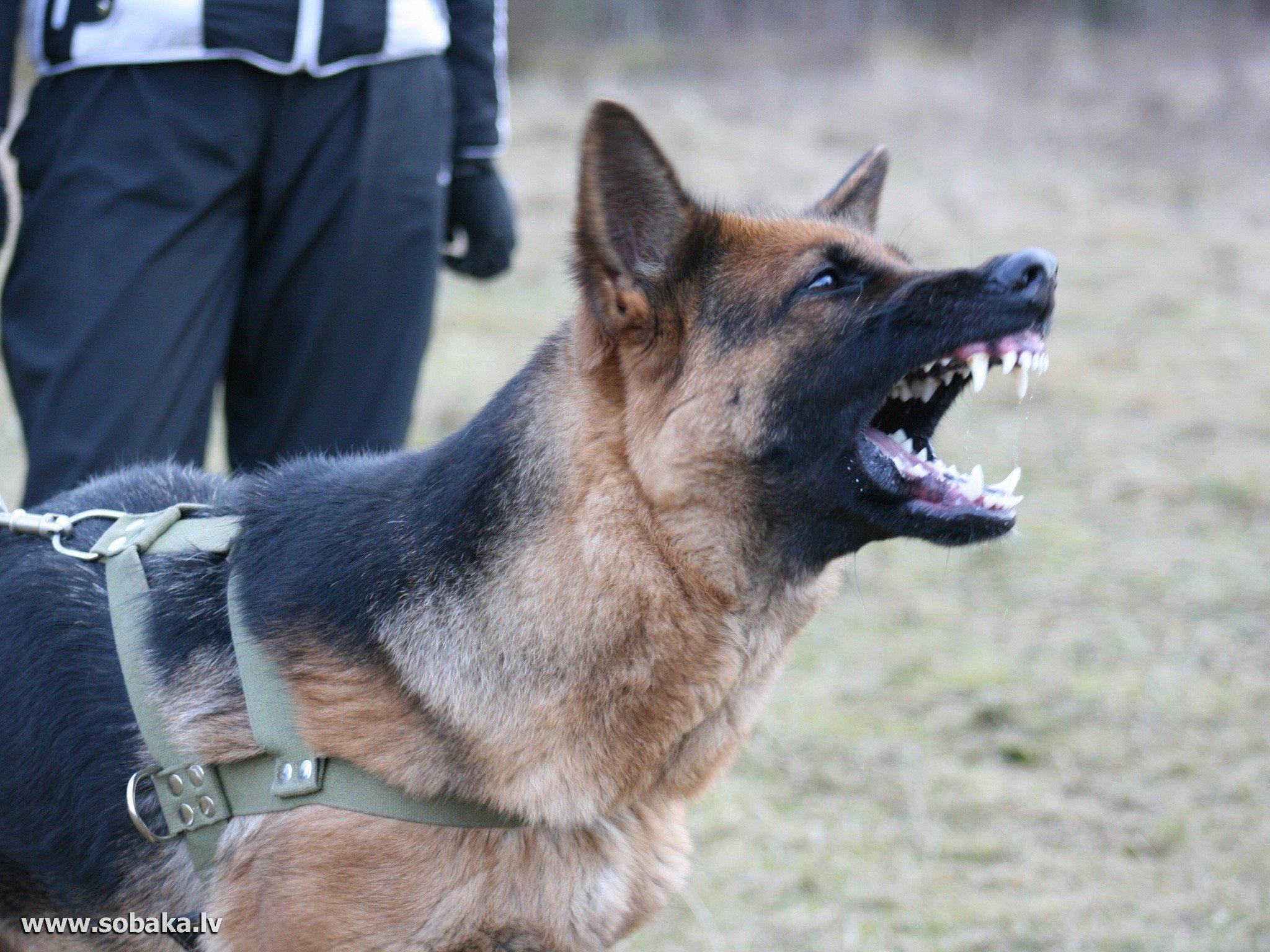 Она по следу мчится.  Ведёт на бой спецназ.  Надёжный страж границы.
