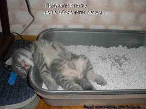 Как сделать чтобы кот спал