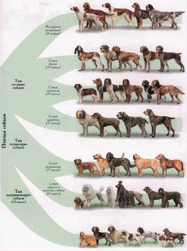 опасность имена планет для собаки переустановить