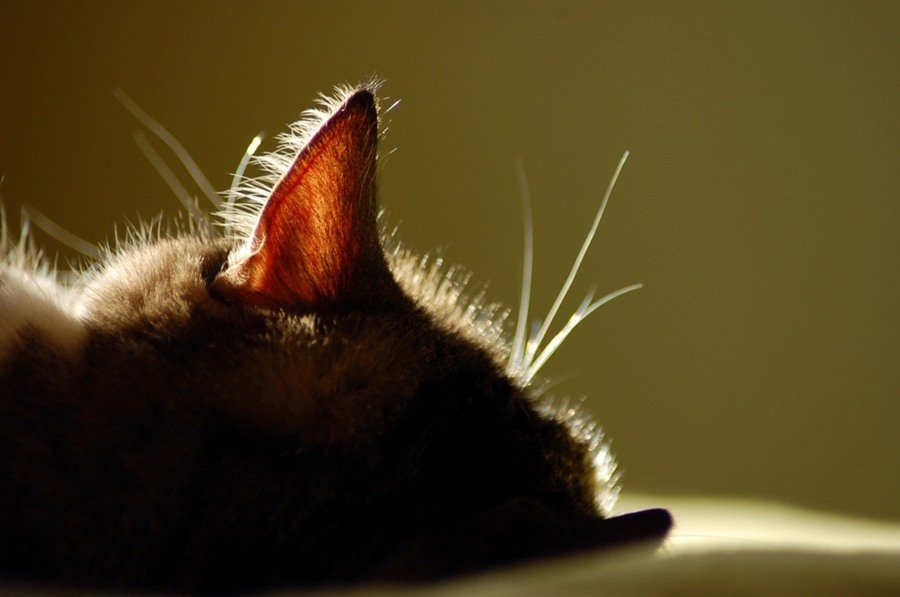 2010. Сегодня дочка придумала расклад (как она говорит–желательно делать на кошачьих колодах–Белых кошек,богемских...