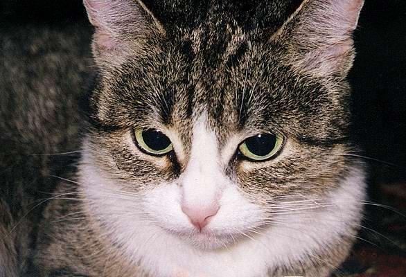 Здравствуйте.  Кошке 15 лет,не породистая,обычная,домашней порода.