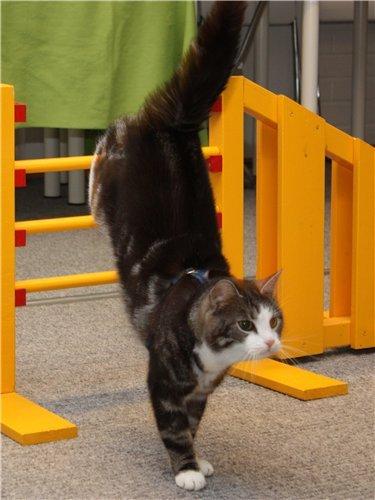 Cat agility set