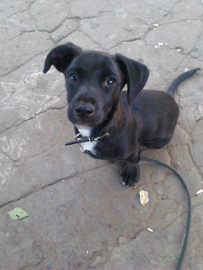 помогите как познакомить собак
