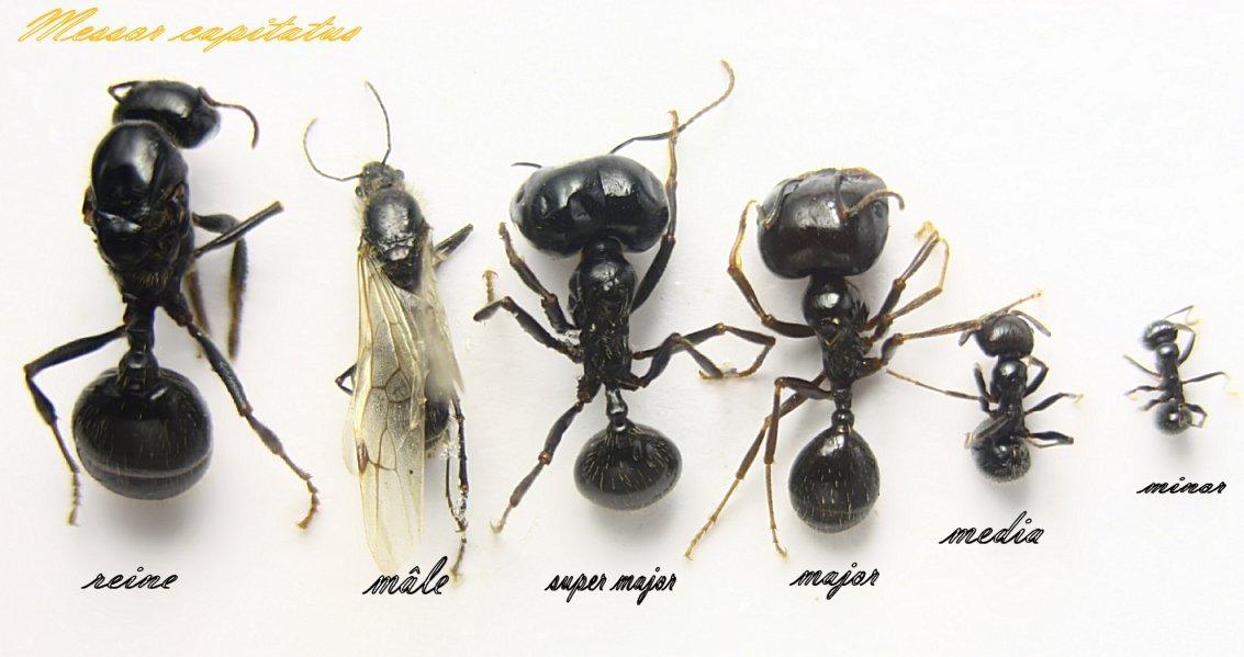 Чем кормить муравьев в домашних условиях