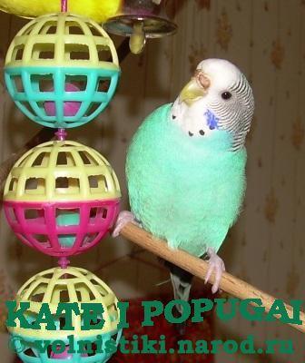 клетку для волнистого попугая