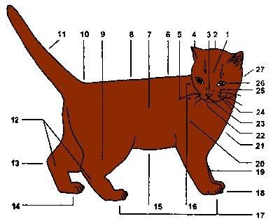 Строение носа кота
